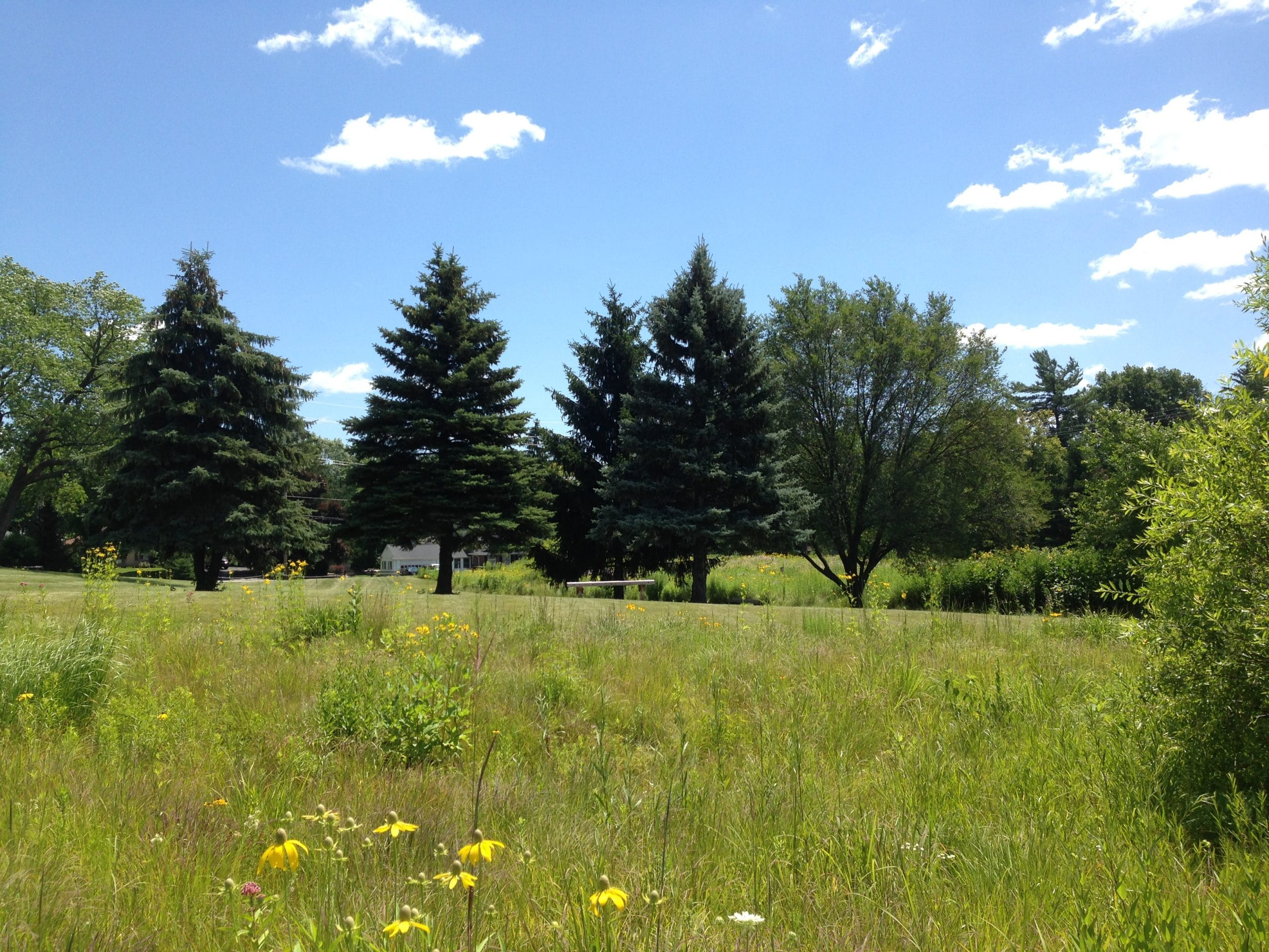 Prairie Habitat at Marywood